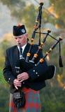 Homem que joga as gaitas de fole escocesas Imagens de Stock