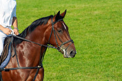 Homem que monta um cavalo Fotografia de Stock