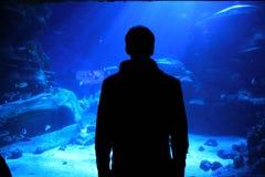 Homem que olha um aquário Fotos de Stock Royalty Free