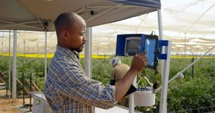 Homem que pesa a cesta do mirtilo na exploração agrícola 4k do mirtilo vídeos de arquivo