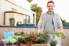 Homem que planta o recipiente no jardim do telhado Fotos de Stock