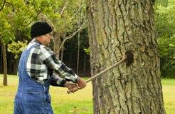 Homem que prepara-se para desbastar abaixo da árvore Imagem de Stock