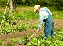 Homem que remove ervas daninhas de seu jardim Fotografia de Stock Royalty Free