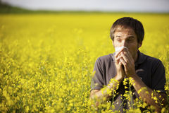 Homem que sofre da alergia do pólen Imagem de Stock
