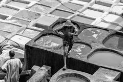 Homem que trabalha nos curtumes Fès Marrocos Fotografia de Stock Royalty Free