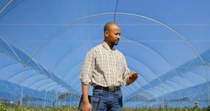 Homem que usa o telefone celular na exploração agrícola 4k do mirtilo filme