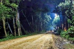 Homem só na estrada de floresta, paisagem da noite Imagens de Stock