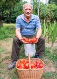 Homem superior com uma cesta dos tomates Fotos de Stock Royalty Free