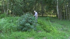 Homem superior do fazendeiro com as plantas de batata maduras da água da lata molhando video estoque