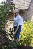 Homem superior que poda arbustos traseiros no jardim Fotos de Stock Royalty Free