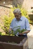 Homem superior que trabalha em seu quintal Fotos de Stock