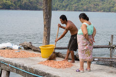 Homem tailandês e mulher que trabalham com camarões secos na aldeia piscatória Ilha Koh Kood, Tailândia Imagem de Stock