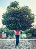 Homem verde Foto de Stock