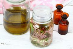 Homemade alternative medicine, Echinacea tincture in front Royalty Free Stock Photo