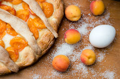 Homemade apricot pie closeup with fresh fruit and egg Royalty Free Stock Images