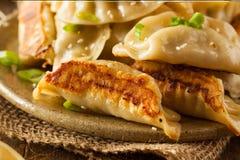 Homemade Asian Pork Potstickers Stock Photos
