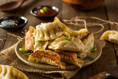 Homemade Asian Pork Potstickers. With Soy Sauce Royalty Free Stock Photo