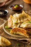 Homemade Asian Pork Potstickers Stock Images