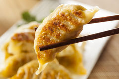 Homemade Asian Vegeterian Potstickers Stock Photography