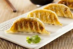 Homemade Asian Vegeterian Potstickers Stock Photos