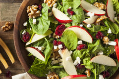 Homemade Autumn Apple Walnut Spinach Salad. With Cheese and Cranberries Stock Images