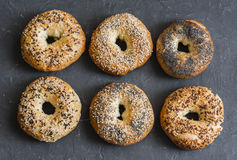 Homemade bagels with a variety of seeds on a gray background, top view. Royalty Free Stock Images
