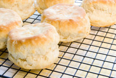 Homemade Baked Buttermilk Biscuits on a Cooling Rack. Homemade baked buttermilk biscuits hot out of the oven and cooling on a kitchen cooling rack. Shot in Stock Images