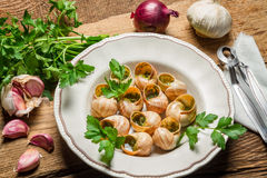 Homemade baked snails with garlic butter and fresh herbs Royalty Free Stock Photo