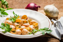 Homemade baked snails with garlic butter and fresh herbs Royalty Free Stock Image