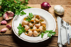 Homemade baked snails with garlic butter Stock Images