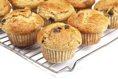 Free Homemade Banana Chocolate Chip Muffins Royalty Free Stock Image - 25851016