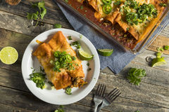 Homemade Beef Enchiladas with Red Sauce Stock Images