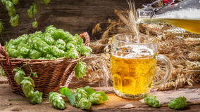 Homemade beer made of fresh hops Stock Photography