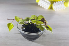 Homemade birch cosmetics for spa withbirch branch Stock Images