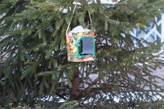 Homemade bird feeder. From a plastic bottle hanging on a branch Royalty Free Stock Photography