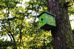 Bird home on the tree. Homemade bird home on the old tree Royalty Free Stock Image