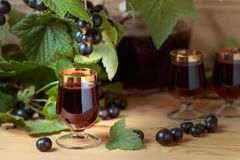 Homemade black currant liqueur and fresh berries . Homemade black currant liqueur and fresh berries on a branch , wooden background royalty free stock image