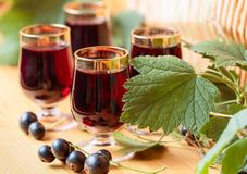Homemade black currant liqueur and fresh berries royalty free stock photos