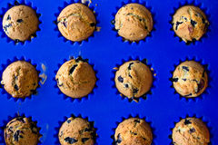 Homemade blueberry muffins with berries closeup in bright blue baking dish Royalty Free Stock Photos