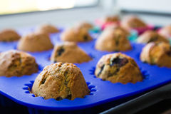 Homemade blueberry muffins with berries closeup in bright blue baking dish Royalty Free Stock Image