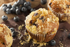 Homemade Blueberry Muffins for Breakfast Royalty Free Stock Image