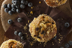 Homemade Blueberry Muffins for Breakfast Stock Photos