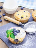 Homemade blueberry muffins Royalty Free Stock Image