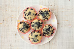 Homemade blueberry muffins in paper cupcake holder Stock Image
