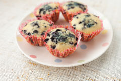 Homemade blueberry muffins in paper cupcake holder Stock Images