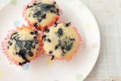 Homemade blueberry muffins in paper cupcake holder Royalty Free Stock Photography