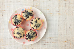 Homemade blueberry muffins in paper cupcake holder Stock Photos