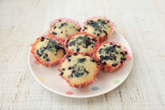 Homemade blueberry muffins in paper cupcake holder Royalty Free Stock Image