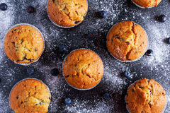 Homemade Blueberry Muffins with powdered sugar, fresh berries. Royalty Free Stock Photo