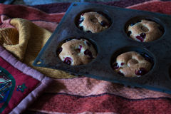 Homemade blueberry muffins. Still-life photography Royalty Free Stock Photo